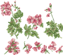 10127 Cross stitch geranium machine embroidery set