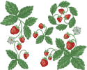 10353 Strawberry machine embroidery set